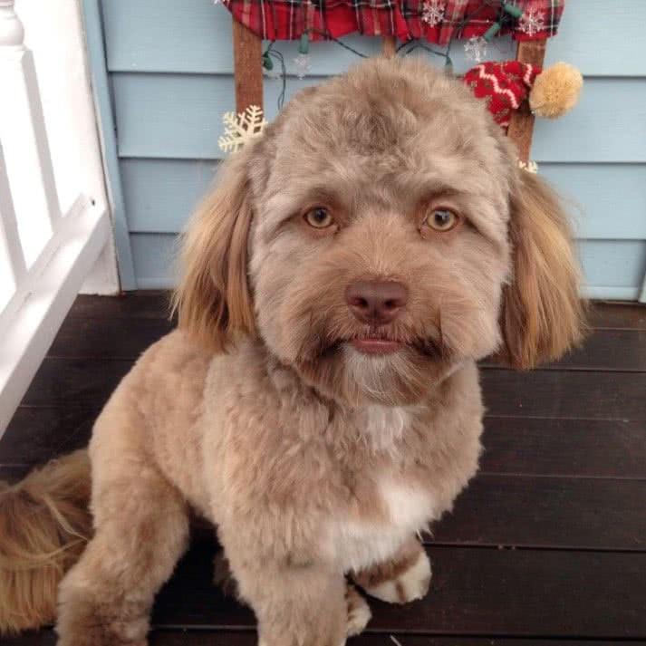 cão que tem um rosto
