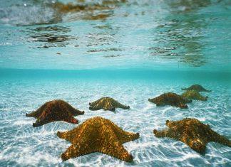 O mar ajuda-nos a curar