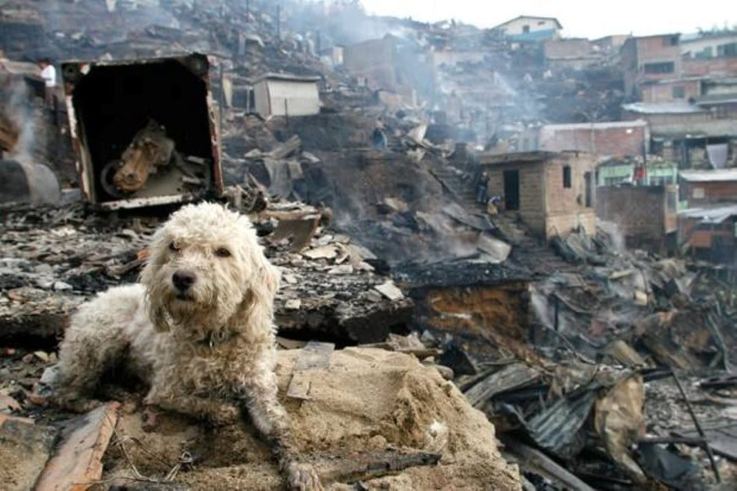 Animais privados de resgate