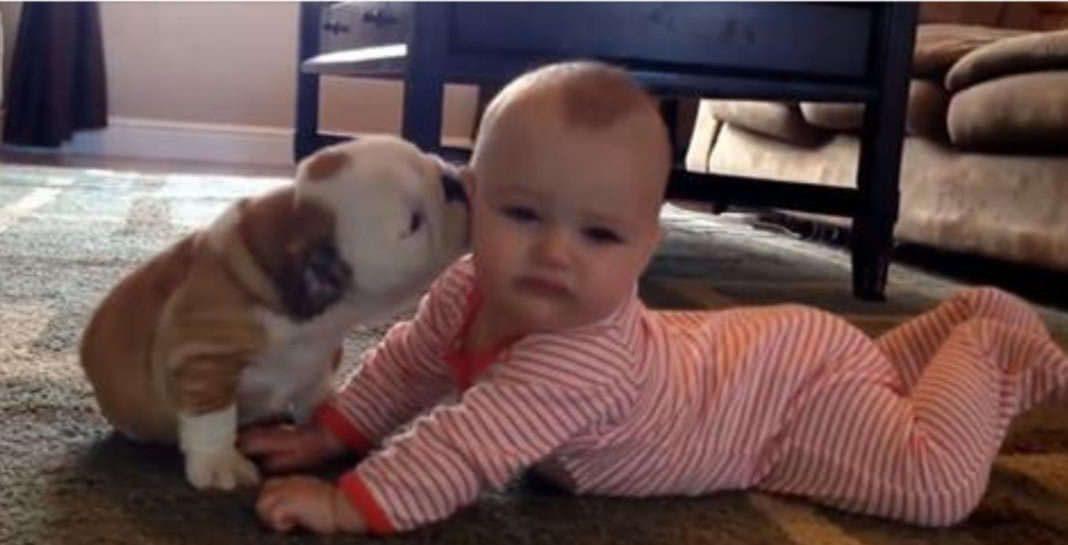 Cãozinho e bebé trocam carinhos de amor