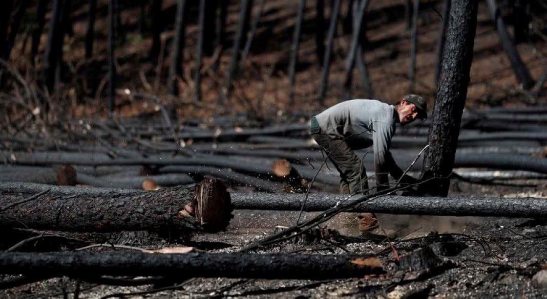 verbas para as vítimas dos incêndios de 2017