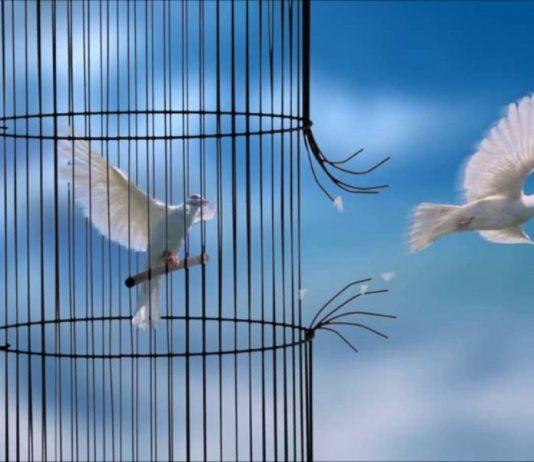 Índia proíbe encarceramento de pássaros