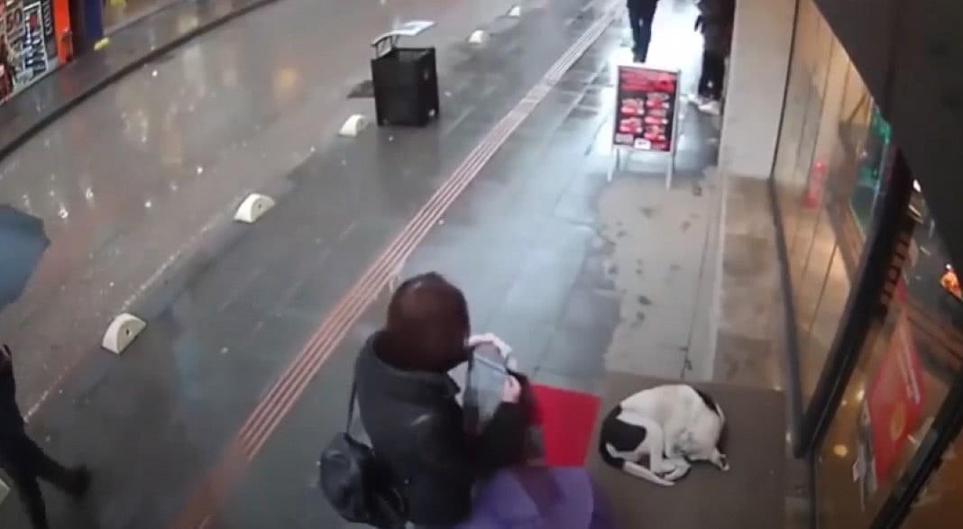 cão deitado à porta de um café