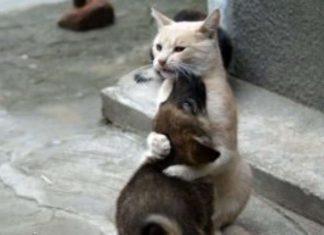 Gato não contém a emoção