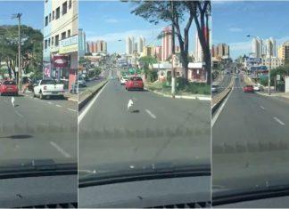 Cão abandonado corre atrás do dono