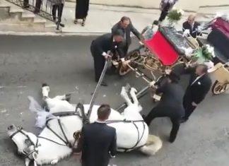 Cavalo exausto não resiste