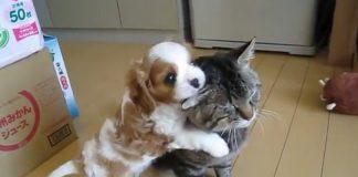 Cão ainda bebé não desgruda