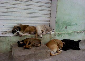 envenenar animais de rua