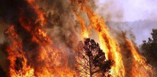 detido o incendiário de Castelo Branco