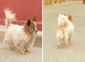 Cão abandonado há uma década
