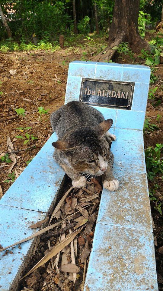Gatinho visita sepultura do dono