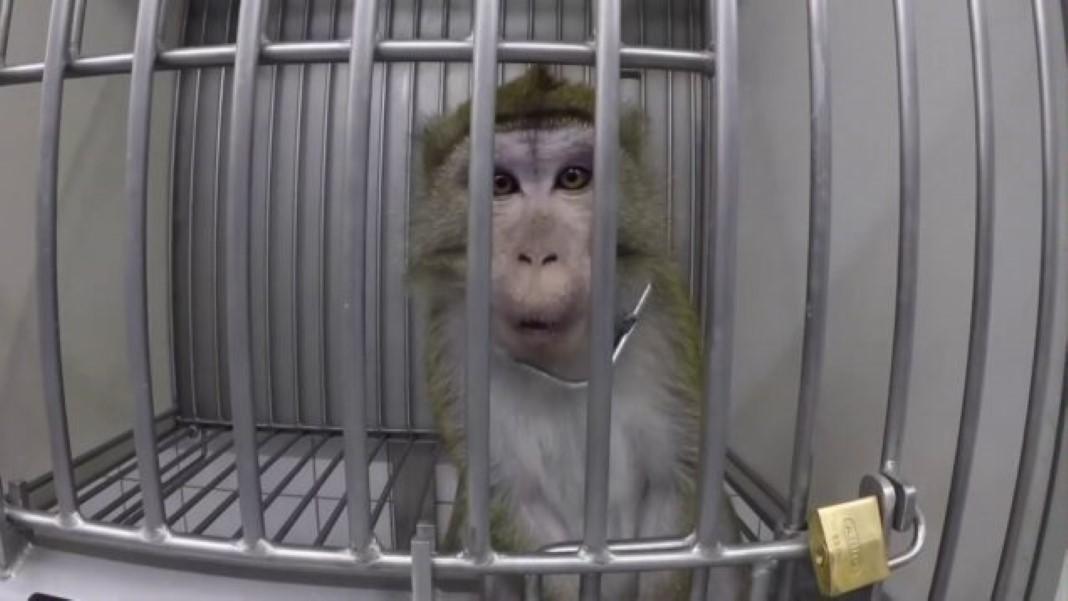 testes com animais na Europa