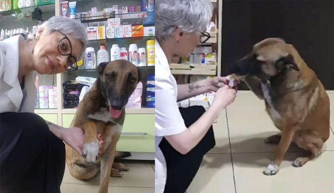 cadela entra numa farmácia