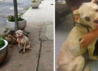 Carteiro salva cão abandonado