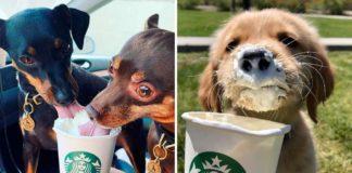 Bebidas para cães