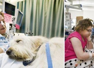 Hospital permite que animais de estimação visitem os seus donos.