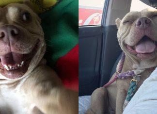 Pit bull nunca mais parou de sorrir