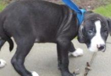 Cão é abandonado por ser cego de um olho