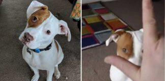 Cão surdo aprende linguagem gestual