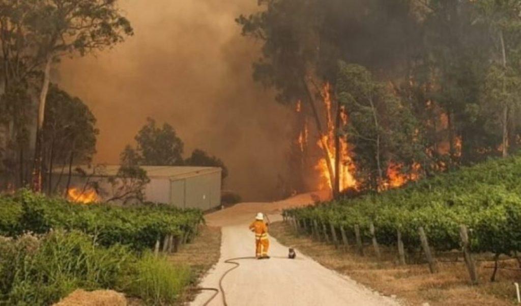 Coala permanece ao lado de bombeiro