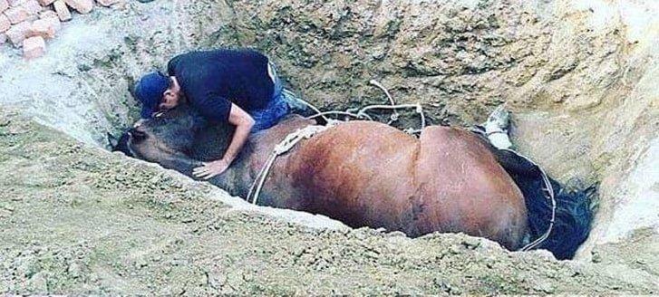 Jovem chora ao lado do seu cavalo falecido