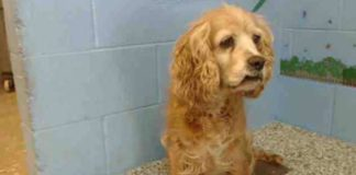 Cachorro idoso chora ao ser abandonado no canil