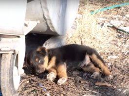 Cachorrinho é encontrado abandonado