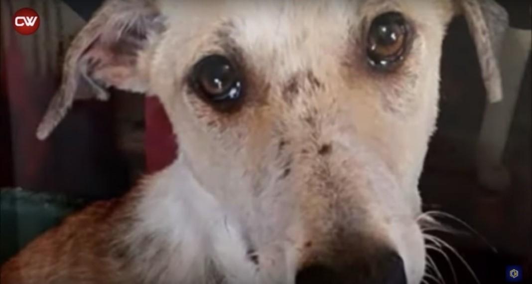 Cão entregue a um canil