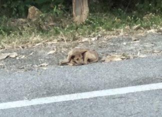 Cão é resgatado na estrada