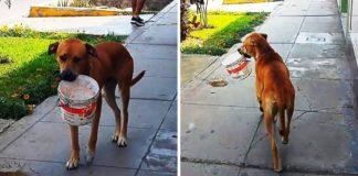 cão procura ajuda nas ruas