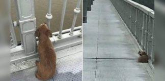 Cão esperou numa ponte por quatro dias