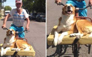 Cão ama passear de bicicleta com o dono