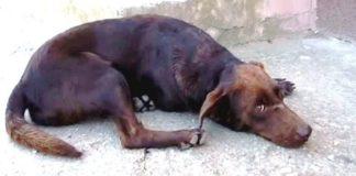 Cão de rua deita-se todos os dias no mesmo local