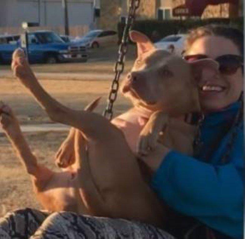 Cão esperou horas até ser salvo