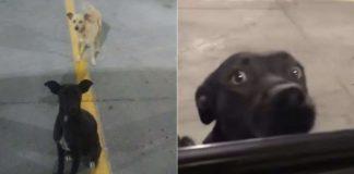 Cães abandonados em estacionamento