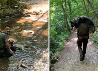 Guarda florestal carrega cão desidratado