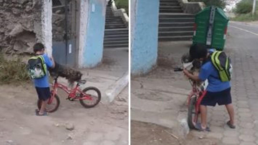 Criança coloca máscara no cão