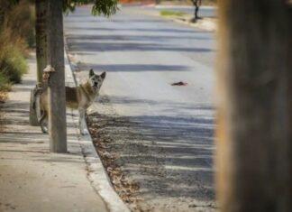 Cão permanece no mesmo lugar