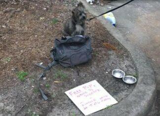 Homem é preso e deixa cão aos cuidados dos amigos