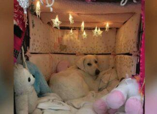 Mulher transforma 'caixote' de cachorro resgatado e traumatizado em um quarto super fofo