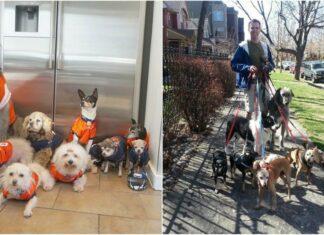 Homem adopta cães idosos