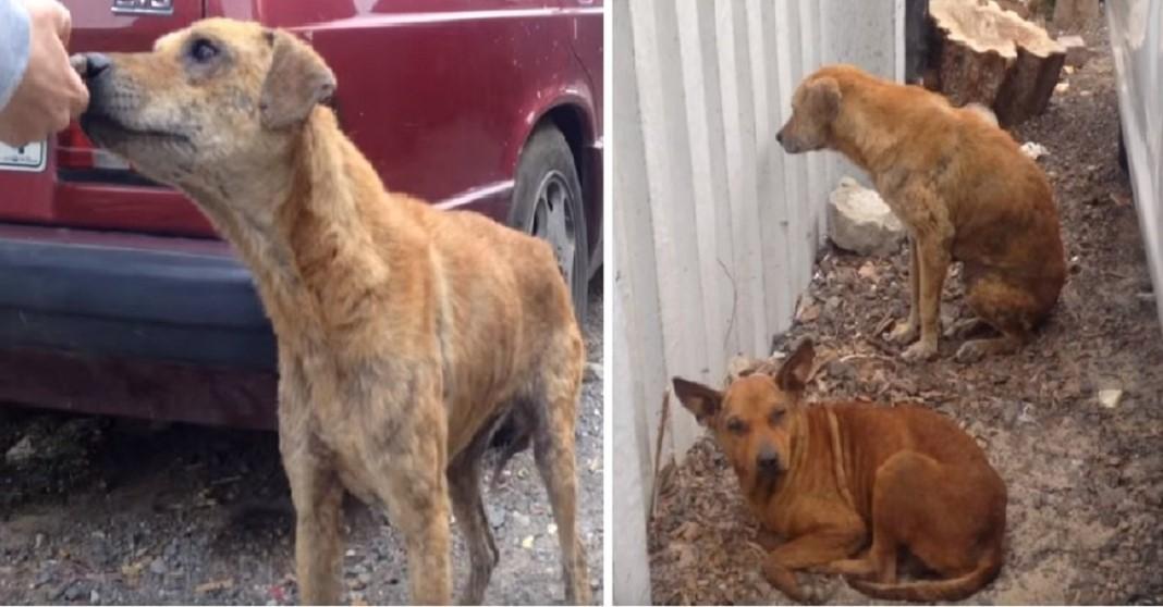 Cão faminto guia os socorristas
