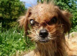 """Cão de rua chamado de """"assustador"""""""