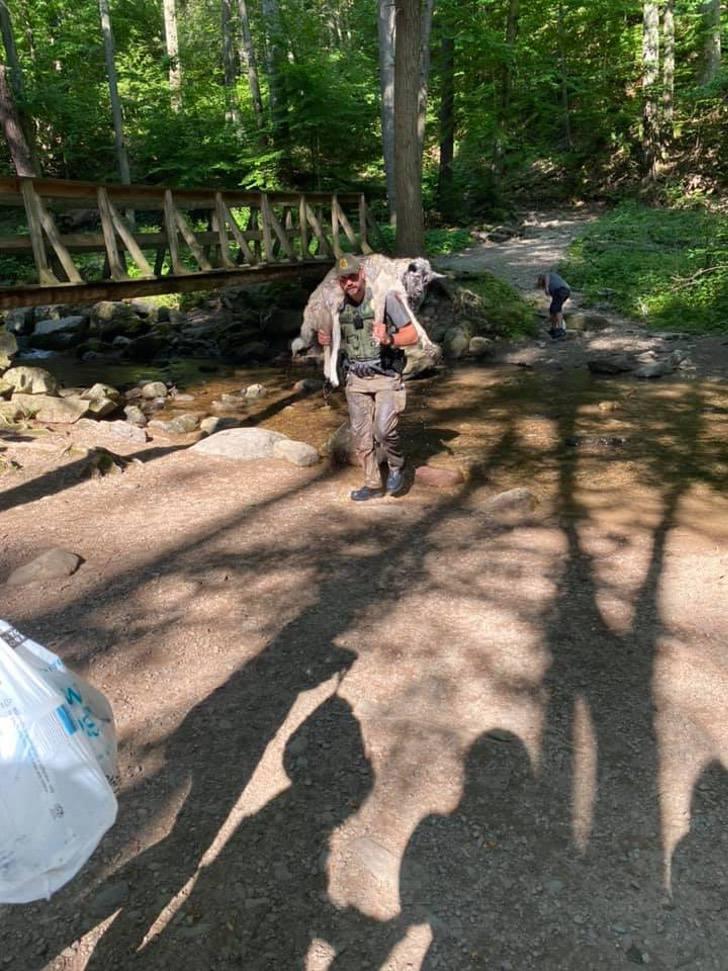 Guarda florestal carrega cachorro desidratado