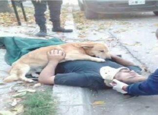 Cão não para de abraçar seu dono que caiu de escada
