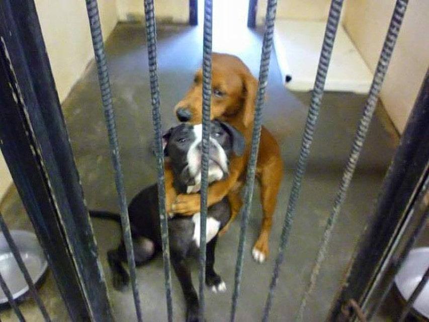 Abraço salva vida de duas cadelas