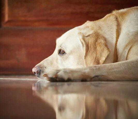 PAN quer multas para quem deixar animais sozinhos